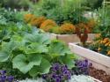 इन गर्मियों में अपने घर के गार्डन में उगाएं यह सब्ज़ियां