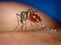 जानिए आखिर क्यों कुछ लोगों को मच्छर ज्यादा काटते हैं