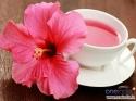 गुड़हल के फूल की चाय है आपकी सेहत के लिए जरूरी, जानिए 10 फाय