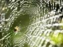 मकड़ी के जाले को इन तरीकों से हटाएं