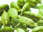 Health Benefits Cardamom Aid