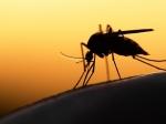 मलेरिया रोकने वाली दवाइयां हुई बेअसर, स्टडी में खुलासा दक्षिण-पूर्वी एशिया मलेरिया की जद में