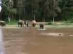 नदी में डूबते हुए इंसान को हाथी के बच्चे ने बचाया, सोशल मीडिया पर लोग तारीफ करते नहीं थक रहे