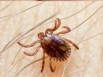 कांगो बुखार का  फैला कहर, जानें लक्षण और बचाव के बारे में