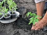छत पर बागवानी के लिए ऐसे तैयार करें मिट्टी और प्लास्टिक के गमले
