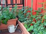 विंटर में यह सब्जियां टेरेस गार्डन के लिए हैं एकदम परफेक्ट