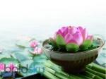 जब आपके वॉटर प्लांट्स में न खिले फूल तो अपनाएं ये आसान तरीके