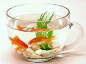किस तरह से दो मछलियों को रखें साथ