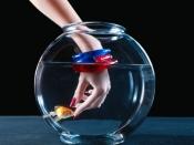 कब और कितना भोजन खिलाएं मछली को?
