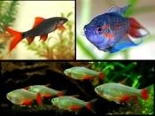 अपने एक्वेरियम में रखें ये खूबसूरत और प्यारी मछलियां