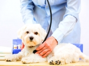 क्या आपका कुत्ता बीमार है पहचानिए लक्षण