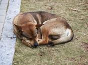 कैसे करें सर्दियों में कुत्ते की देखभाल