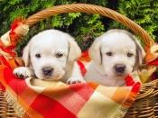 अपने प्यारे से कुत्ते की सेहत का कैसे रखें ध्यान