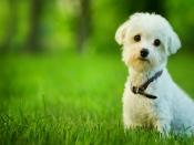 पालतू जानवरों से होने वाली एलर्जी से बचने के उपाय