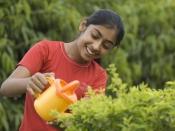 अपने बगीचे में कैसे उगाये बुनियादी सब्ज़ियाँ