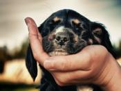 अगर करते हैं अपने पालतू जानवर से प्यार तो ऐसे रखें उसका ख्याल