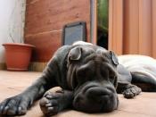 5 कारण, जो बताएंगे कि आपका कुत्ता घर के अंदर पेशाब क्यूं करता है