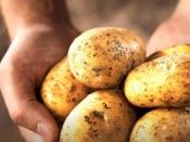 क्या हाई ब्लड प्रेशर, कोलेस्ट्रॉल और मोटापे से ग्रस्त लोग आलू खा सकते हैं?