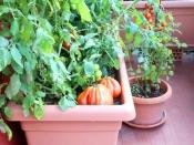 30 दिनों में घर पर ही उगा सकते हैं ये सब्जियां