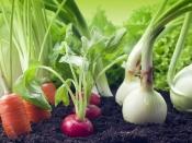 गार्डनिंग टिप्स: बिना माली खुद ही तैयार करें घर पर बगीचा