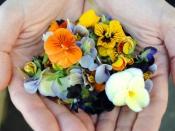 सूंघिए ही नहीं चखकर भी देखिए इन फूलों को, रहेंगे हेल्दी और खूबसूरत भी