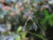 इन 15 प्राकृतिक तरीकों से घर के पास भी नहीं दिखेंगी मकड़ियां