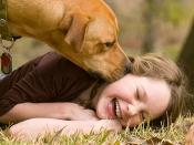 सावधान! पालतू कुत्तों के लार में पाया जाता है ये खतरनाक बैक्टीरिया, चाटने से भी हो सकती है मौत