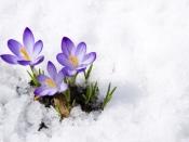 सर्द मौसम में सूख रही बगिया को फिर से गुलजार बनाएं, इन मौसमी फूलों को लगाएं