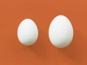 जानें क्यों ज्यादा हेल्दी होते है बतख के अंडे, जानें कैसे हैं मुर्गी के अंडों से अलग