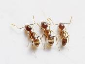 चींटी के काटने पर हो सकती है जलन और सूजन, जानें कैसे दूर करें