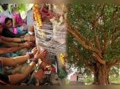 Ashadha Amavasya: कुंडली में पितृ दोष से मुक्ति के लिए अमावस्या के दिन जरुर लगाएं ये पौधे