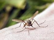जानें किस गंध से मच्छर रहते है कोसों दूर, कौनसी गंध उन्हें बुलाती है पास