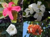 सावन में भगवान शिव को चढ़ाएं केवल ये फूल, जल्द होगी मनोकामना की पूर्ति