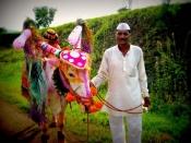 Pola Festival 2021 : छत्तीसगढ़-महाराष्ट्र में पोला तिहार की धूम, भगवान श्रीकृष्ण के बालरूप से है इसका संबंध