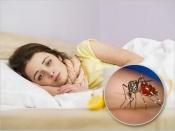 अलर्ट! कोरोना के बाद अब मिला डेंगू का नया वेरिएंट DENV-2, जानें क्यों है चिंता की बात