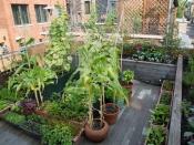 प्लेन छत को खूबसूरत टैरेस गार्डन बनाने के लिए इन टिप्स को करें फॉलो