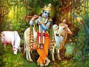 गोपाष्टमी पूजा: जब इंद्र ने श्रीकृष्ण को दिया गोविंदा नाम