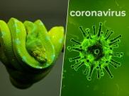 सांपों से इंसान में पहुंचा Corona Virus, इलाज ढूंढने में होगी आसानी