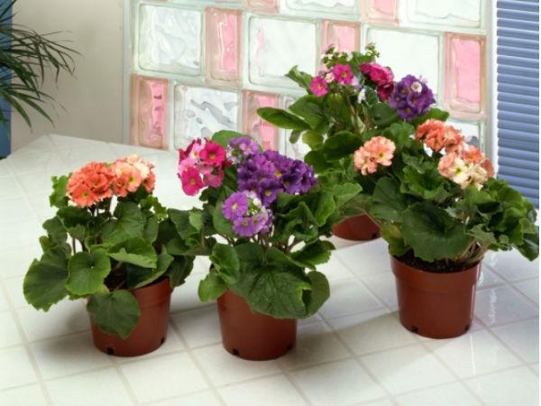 Choosing containers garden - Plantas de interior baratas ...