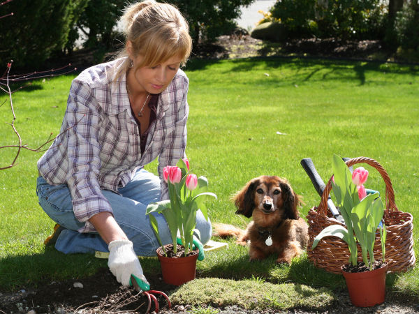 how make pet friendly garden