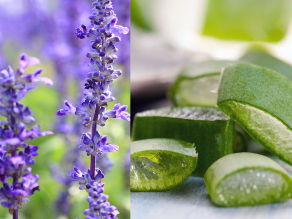 herbs get soft smooth skin