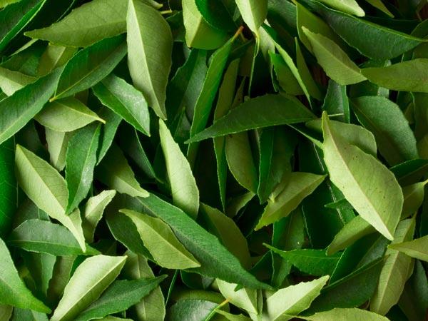 Image result for चाय और कडी पत्ता