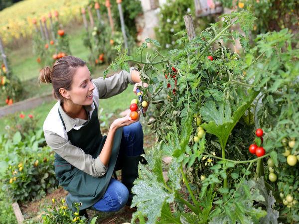 Tips for kitchen garden | किचन गार्डन के टिप्स ...
