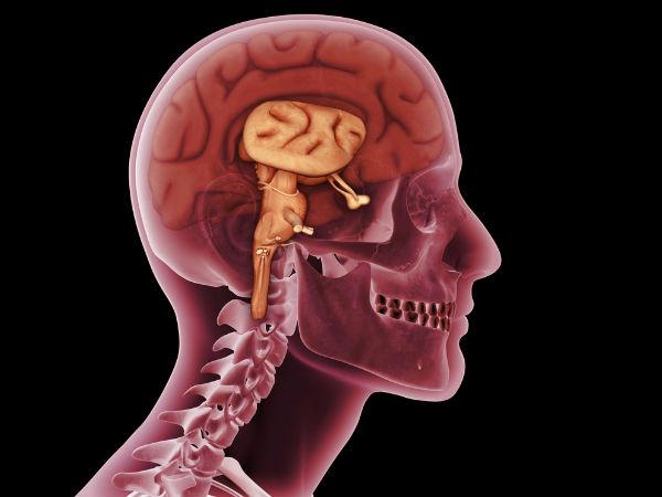 4) दिमाग को सुरक्षात्मक तरीके से बदलता है :