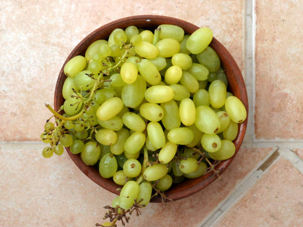 Eat grapes for great eyesight