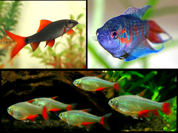 Best Fishes To Have In Your Aquarium