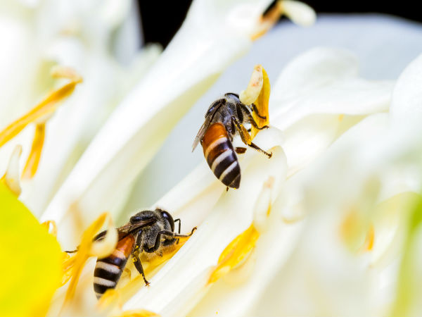 Bees create mental maps to reach home