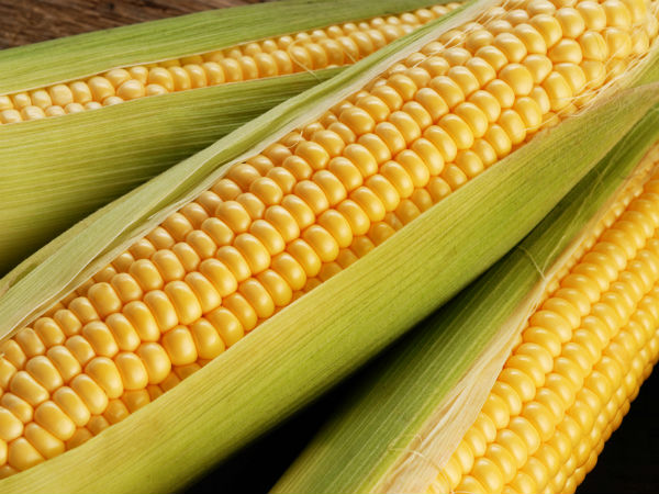 4 Myths About Corn You Should Stop Believing