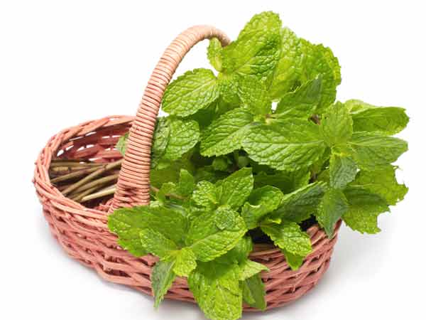 Ways & Benefits Of Eating Mint Leaves