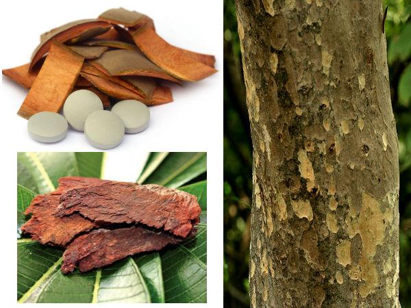 अर्जुन के पेड़ की छाल के गुणकारी फायदे